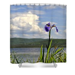 Birch Lake Iris Shower Curtain by Cathy Mahnke