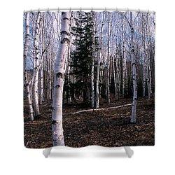 Birches Shower Curtain by Skip Willits