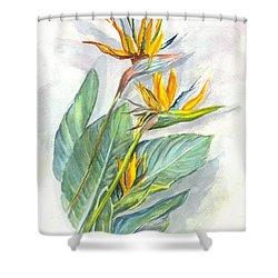 Bird Of Paradise Shower Curtain by Carol Wisniewski