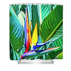 Bird Of Paradise Shower Curtain by Dominic Piperata