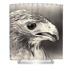 Bird Of Prey Shower Curtain by Dan Sproul