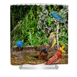 Birds Bathing Shower Curtain by Anthony Mercieca