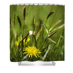 Bird's Eye View Shower Curtain by Christina Rollo