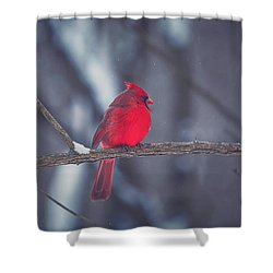 Birds Of A Feather Shower Curtain by Carrie Ann Grippo-Pike