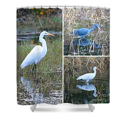 Birds On Pond Collage Shower Curtain by Carol Groenen