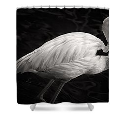 Black And White Flamingo Shower Curtain by Adam Romanowicz