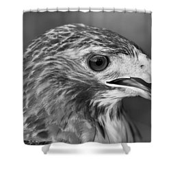 Black And White Hawk Portrait Shower Curtain by Dan Sproul