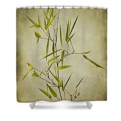 Black Bamboo Stem. Shower Curtain by Clare Bambers