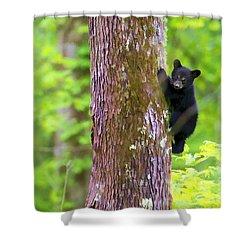 Black Bear Cub In Tree Shower Curtain by Dan Friend