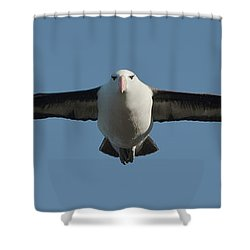 Black-browed Albatross Thalassarche Shower Curtain by Panoramic Images