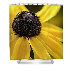 Black Eyed Susan Shower Curtain by Julie Palencia