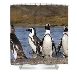 Black-footed Penguins On Beach Cape Shower Curtain by Alexander Koenders