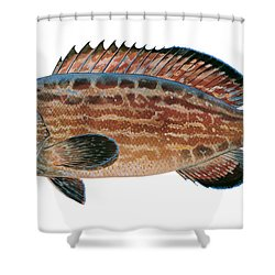 Black Grouper Shower Curtain by Carey Chen