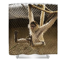 Black Handed Spider Monkey Just Sitting Around Shower Curtain by Thomas Woolworth