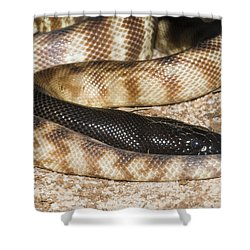Black-headed Python Shower Curtain by William H. Mullins