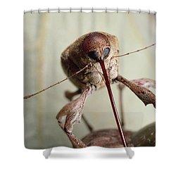 Black Oak Acorn Weevil Boring Into Acorn Shower Curtain by Mark Moffett