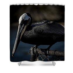Black Pelican Shower Curtain by Ernie Echols
