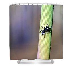 Black Spider In Reeds Shower Curtain by Toppart Sweden
