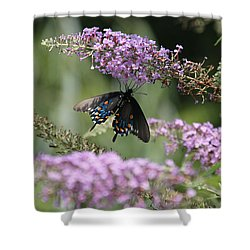 Black Swallowtail1-featured In Newbies-nature Wildlife- Digital Veil-comfortable Art Groups Groups Shower Curtain by EricaMaxine  Price