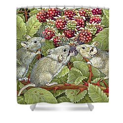 Blackberrying Shower Curtain by Ditz