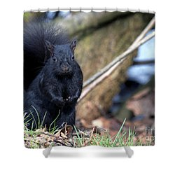 Blackie Shower Curtain by Sharon Talson
