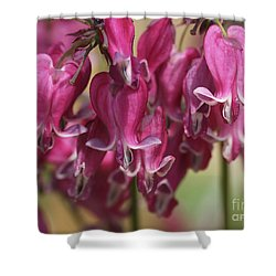 Bleeding Hearts Shower Curtain by Deborah Benoit