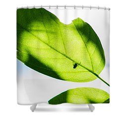 Blessed Days Of Warmth And Sun Shower Curtain by Alexander Senin
