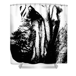 Bloodhound - It's Black And White - By Sharon Cummings Shower Curtain by Sharon Cummings