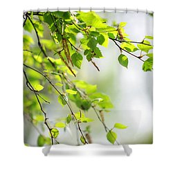 Blooming Birch Tree At Spring Shower Curtain by Jenny Rainbow