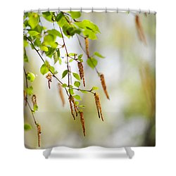 Blooming Birch Tree Shower Curtain by Jenny Rainbow