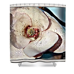 Blooming Magnolia Shower Curtain by Jolanta Anna Karolska
