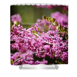Blooming Redbud Tree Cercis Canadensis Shower Curtain by Rebecca Sherman