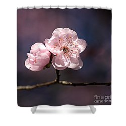 Blossom Shower Curtain by Joy Watson