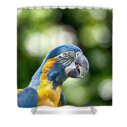 Blue And Gold Macaw V2 Shower Curtain by Douglas Barnard