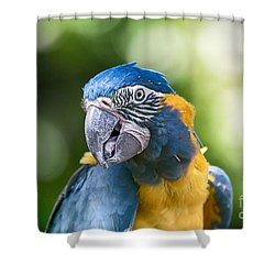 Blue And Gold Macaw V3 Shower Curtain by Douglas Barnard