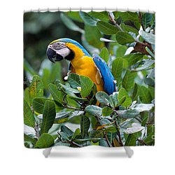 Blue And Yellow Macaw Shower Curtain by Art Wolfe
