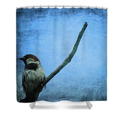 Sparrow On Blue Shower Curtain by Dan Sproul