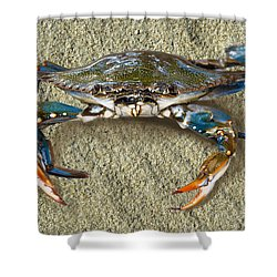 Blue Crab Confrontation Shower Curtain by Sandi OReilly