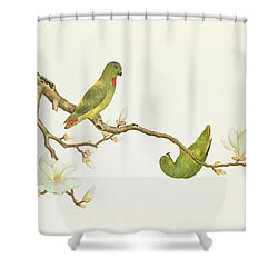 Blue Crowned Parakeet Hannging On A Magnolia Branch Shower Curtain by Chinese School