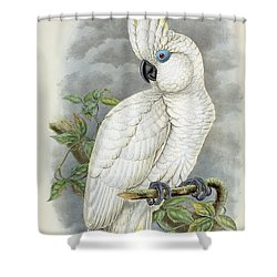 Blue-eyed Cockatoo Shower Curtain by William Hart
