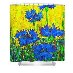 Blue Flowers - Wild Cornflowers In Sunlight  Shower Curtain by Ana Maria Edulescu