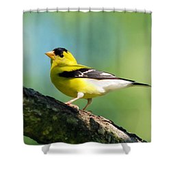 Blue Heart Goldfinch Shower Curtain by Christina Rollo