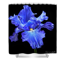 Blue Iris Shower Curtain by Robert Bales
