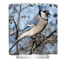 Blue Jay.. Shower Curtain by Nina Stavlund