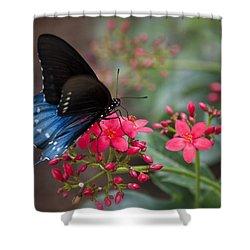 Blue Swallowtail Butterfly  Shower Curtain by Saija  Lehtonen
