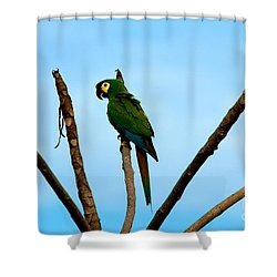 Blue-winged Macaw, Brazil Shower Curtain by Gregory G. Dimijian, M.D.