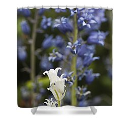 Bluebells 1 Shower Curtain by Steve Purnell