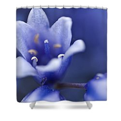 Bluebells 6 Shower Curtain by Steve Purnell