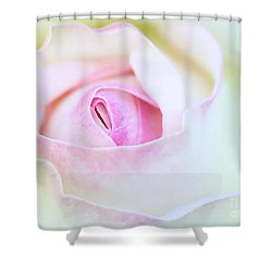 Blushed Rose Shower Curtain by Sabrina L Ryan