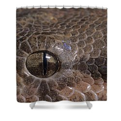 Boa Constrictor Shower Curtain by Chris Mattison FLPA